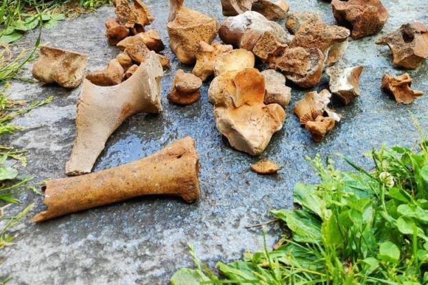 Vaie, da un'intercapedine spunta un mucchietto di ossa: sono umane?