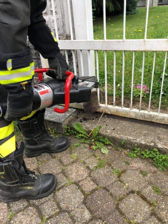 Giaveno, riccio incastrato in un cancello viene liberato dai Vigili del Fuoco