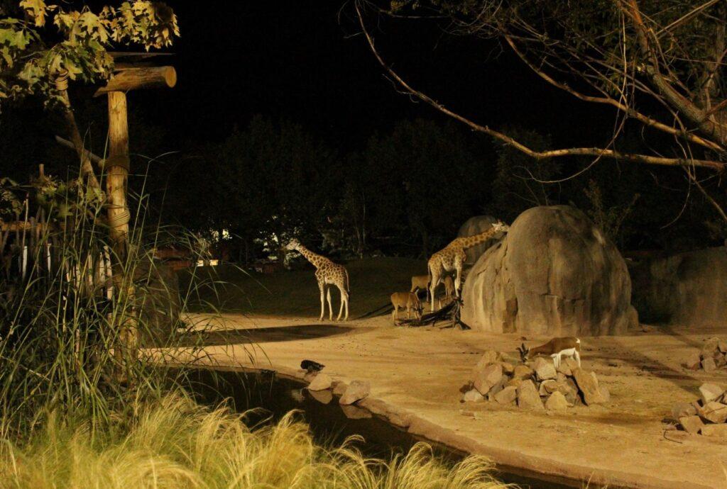 Al Bioparco Zoom ingressi serali gratuiti ai residenti di Cumiana e dei comuni confinanti