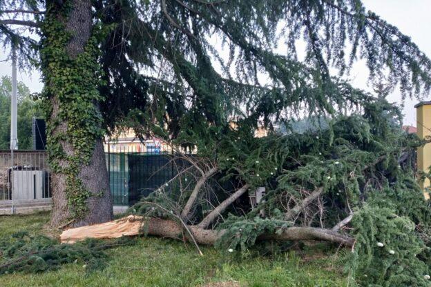 Giaveno, il ramo di un albero del Pacchiotti cede di schianto e danneggia la cancellata